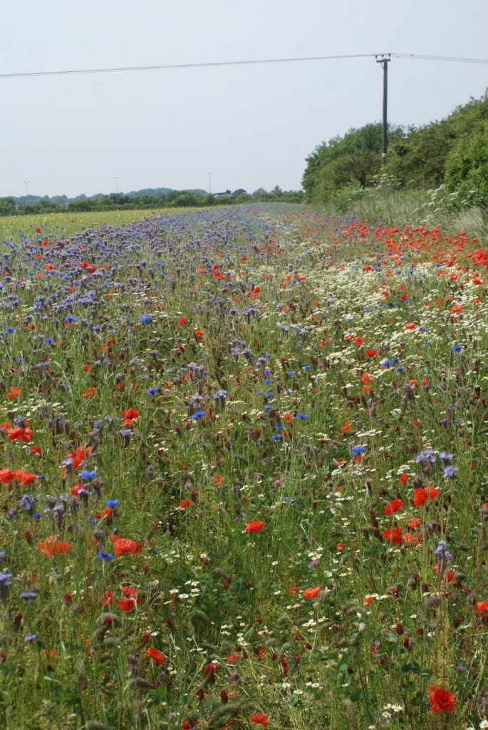 Wild flower boundaries as a source of food for bees