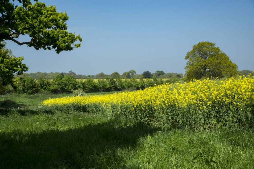 Field margin with buffer zone to protect wildlife