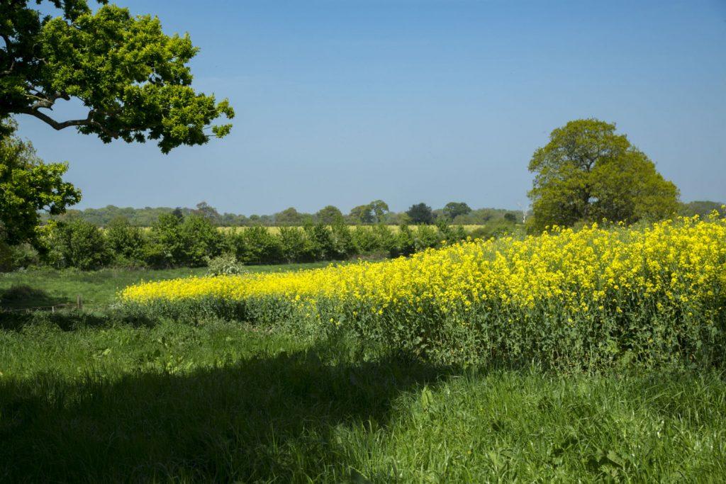 6m buffer zone around a field of Oilseed Rape