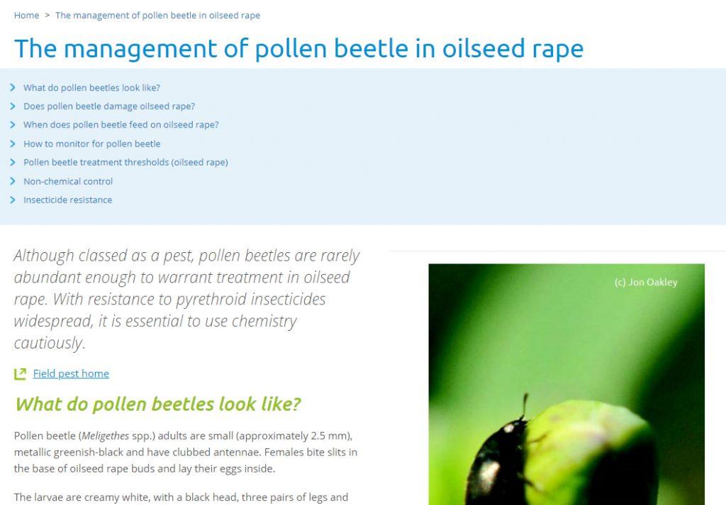 Pollen beetle website